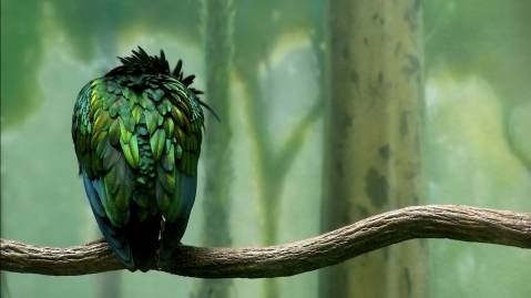 green colored bird