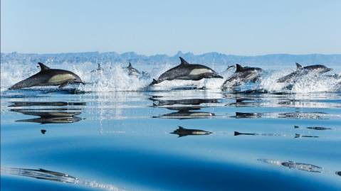 dolphins in sea